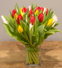 Just Tulips